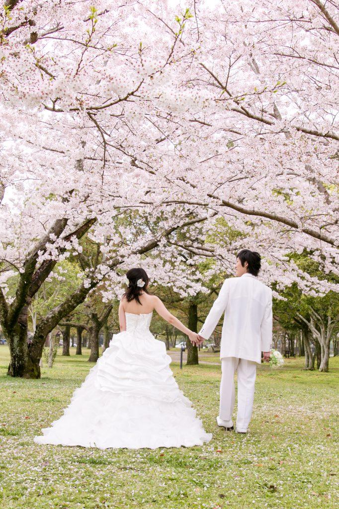 桜と芝生のロマンチックカラー! <br>フォ…