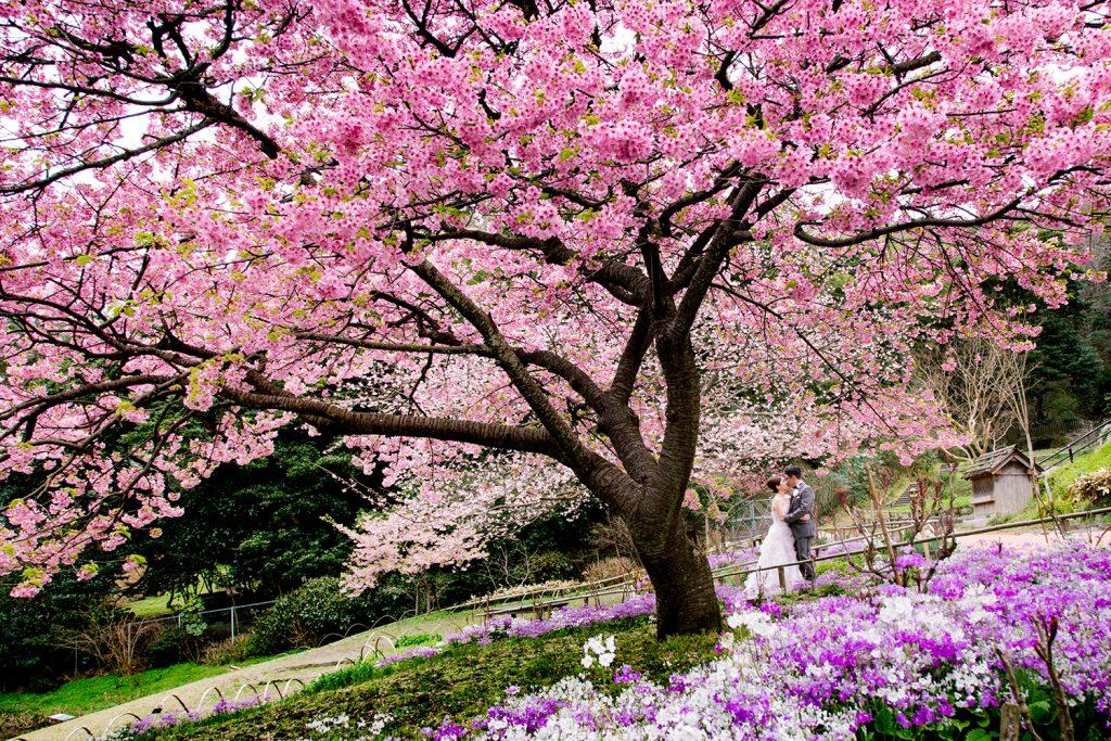 ソメイヨシノだけじゃない日本桜の穴場