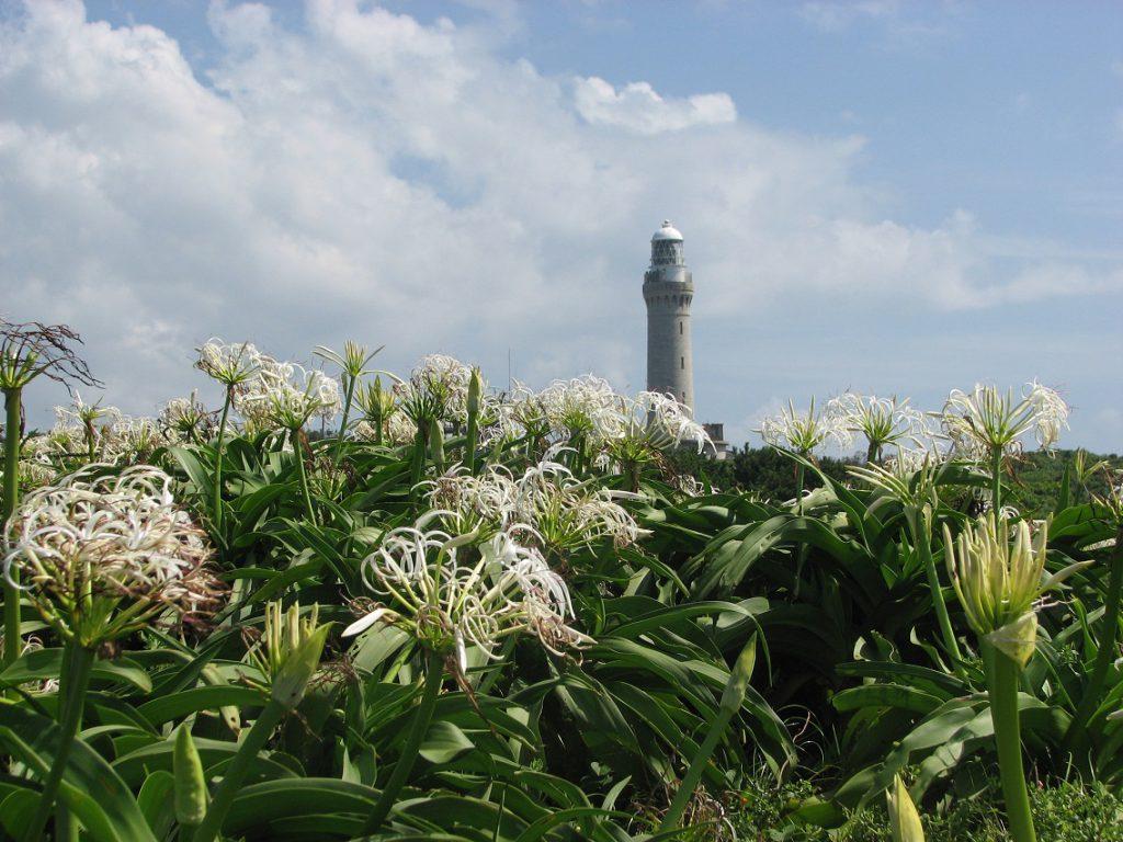 青い海に白い花びら− 絶景「角島」のハマ…