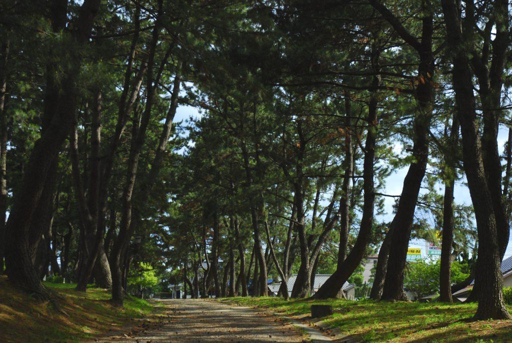 江戸時代の面影が残る松並木