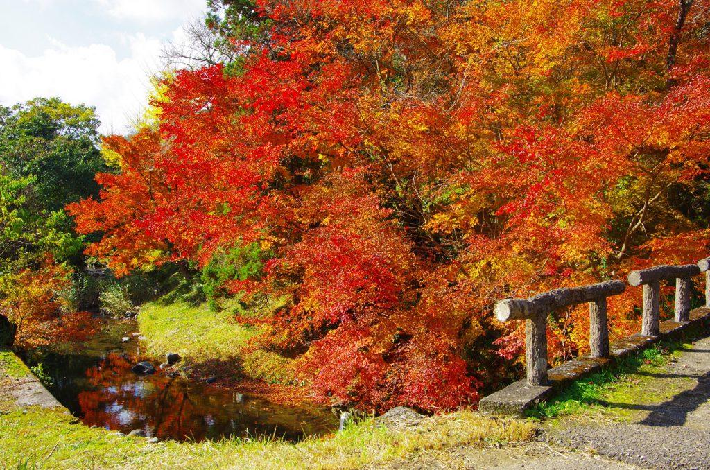 【紅葉狩り】モミジが染まる石柱渓