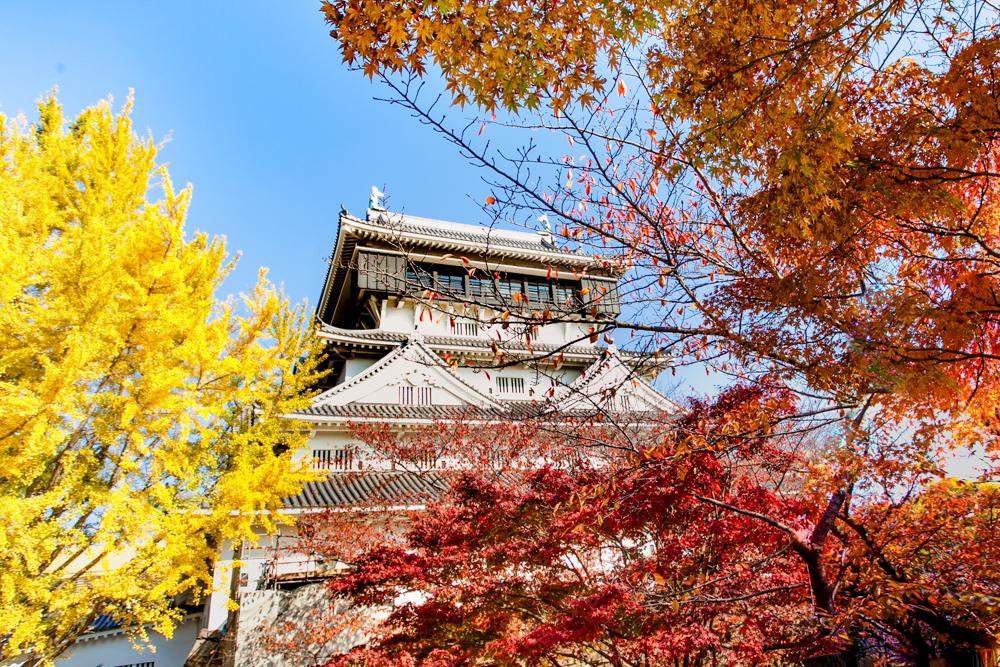 小倉城と紅葉が織りなす日本の景観美!