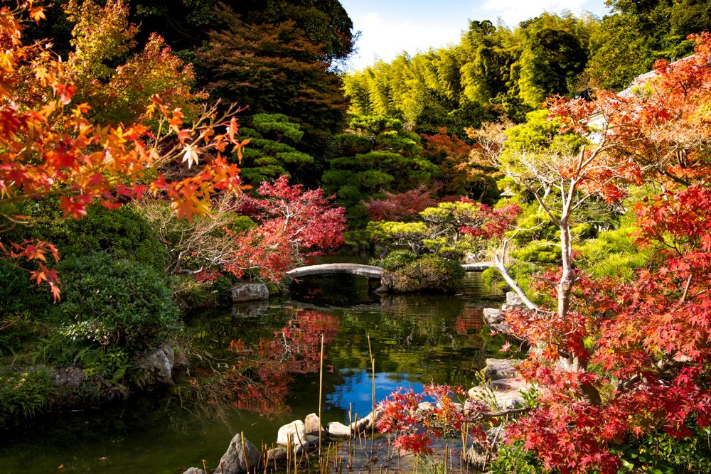"""珍しい""""鏡紅葉""""も!長府庭園で秋を感じる"""