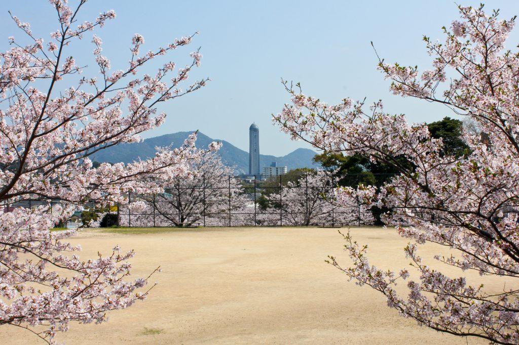 維新の歴史と共に桜観賞はいかが?