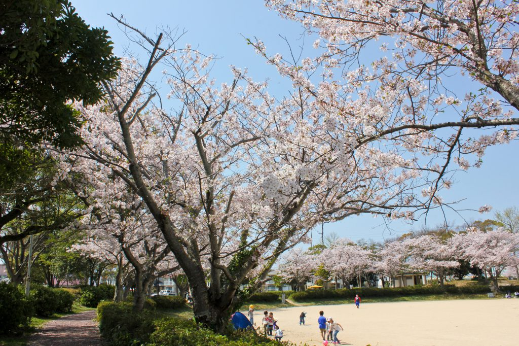 隠れた桜の名所で古墳散策も