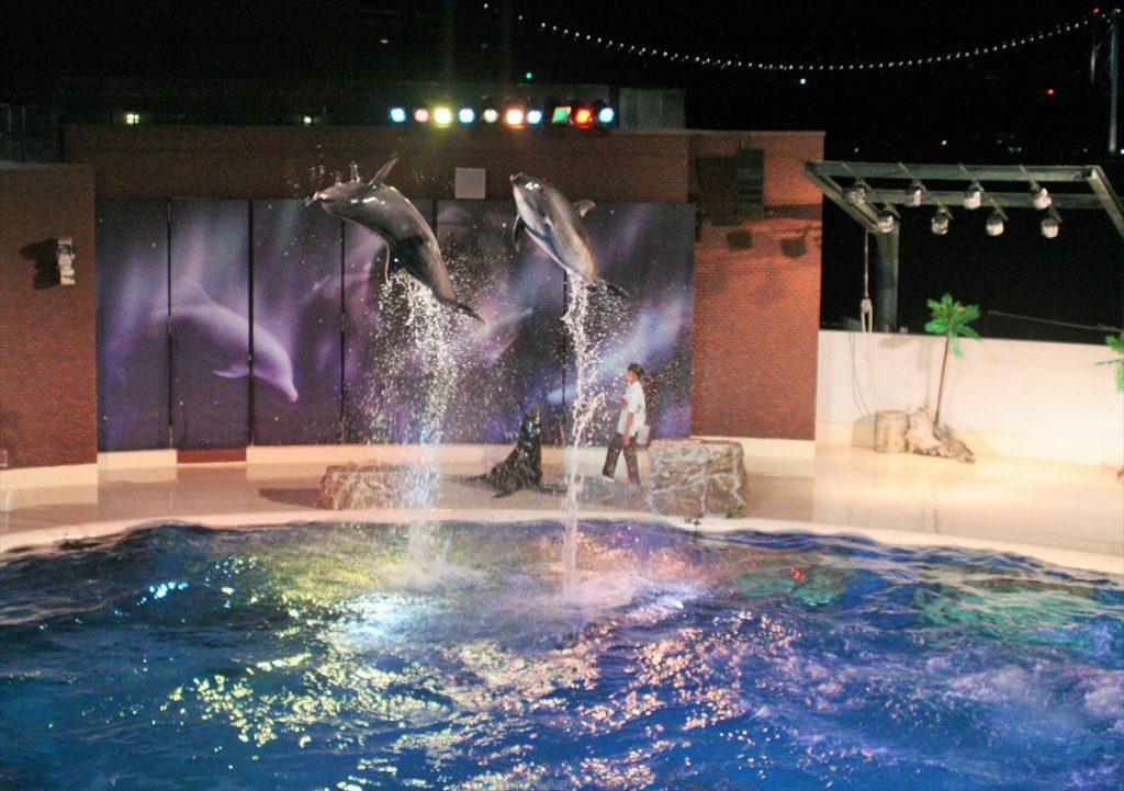 夜の水族館、開催