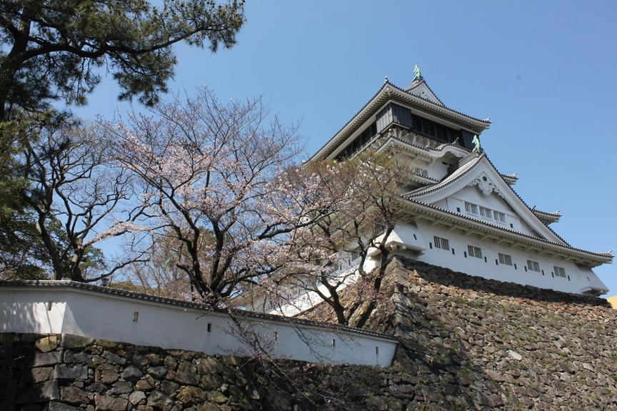 桜開花情報2020(1)